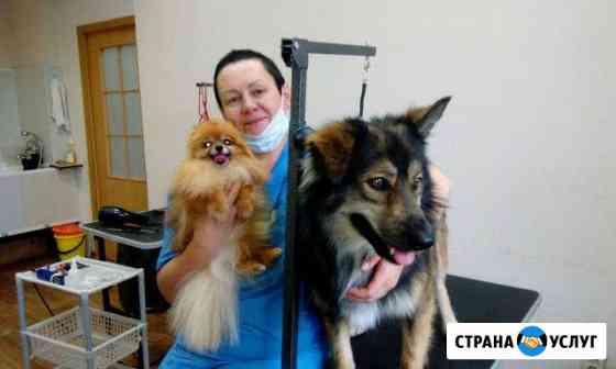 Стрижка собак и кошек. Ультрозвуковая чистка зубов Петрозаводск