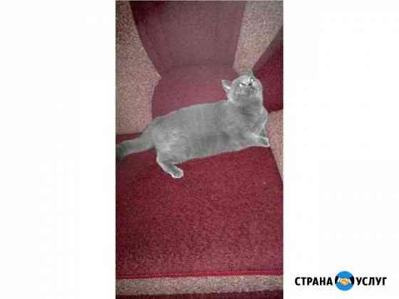 Вязка кошек Архангельск