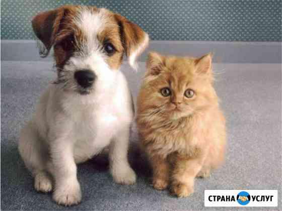 Передержка домашних животных Кострома