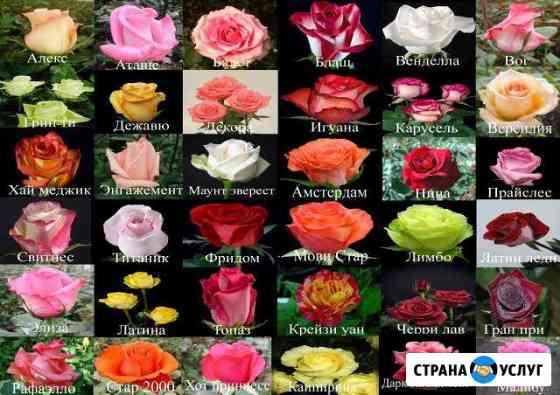 Цветочный магазин/доставка цветов Рязань