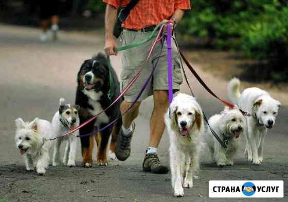 Выгул собак Великие Луки
