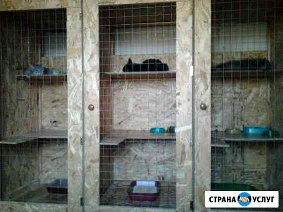 Специализированная гостиница для кошек Астрахань
