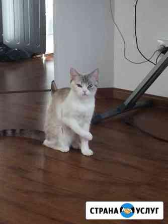 Вязка кошки Улан-Удэ