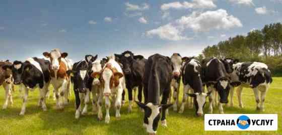 Производить молоко с прибылью.Кормление коров Владикавказ
