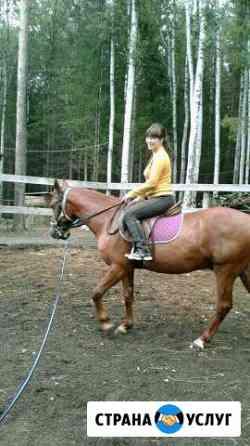 Заездка лошадей Пермь