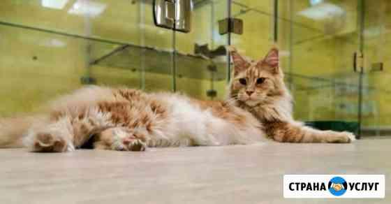 Передержка котов Ульяновск. Отель для котов Ульяновск