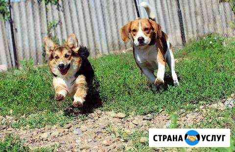 Гостиница для животных, передержка, дрессировка Архангельск