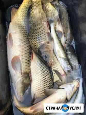 Рыбалка в Астрахани Сероглазка Тамбовка