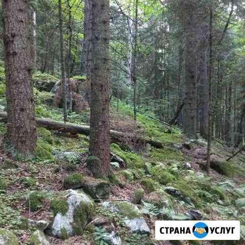 Удаление аварийных деревьев Черкесск