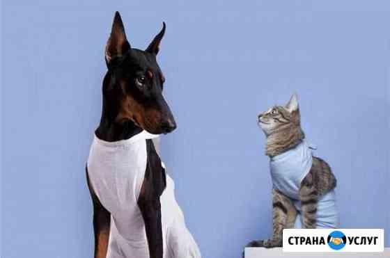 Стерилизация кошек/собак(бюджетная) вет.клиника лл Йошкар-Ола