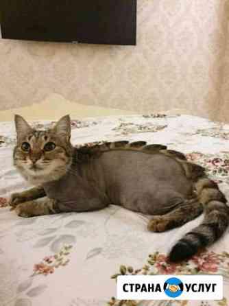 Груминг кошек Каспийск