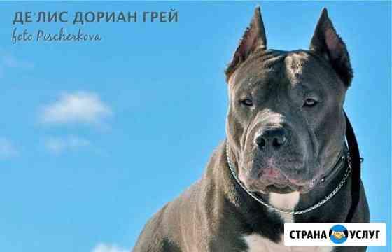 Кобель Ковров