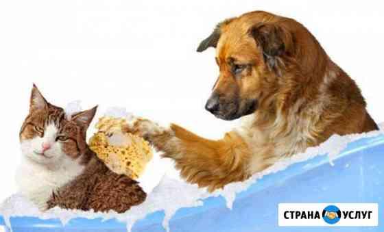 Стрижка кошек и собак Владикавказ