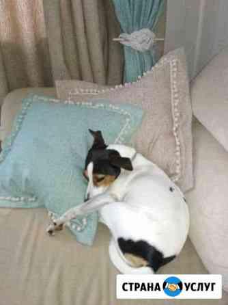 Домашняя гостиница для собак Северодвинск
