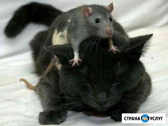 Передержка кошек, грызунов Ярославль