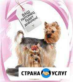 Стрижка кошек и собак Сыктывкар