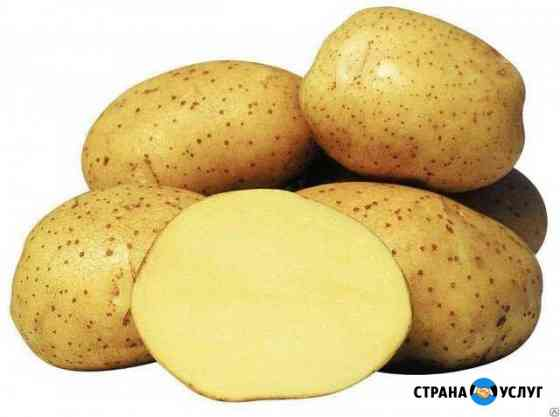 Картофель Абакан