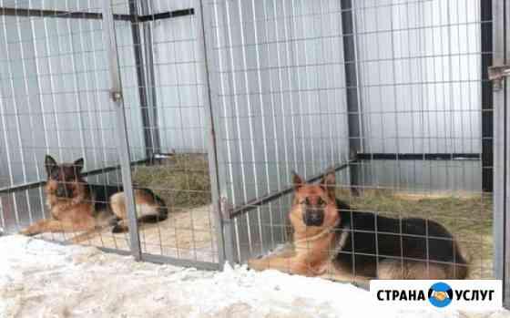 Передержка крупных и средних собак Петропавловск-Камчатский
