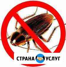 Уничтожение тараканов газом. Гарантия. Результат Хабаровск