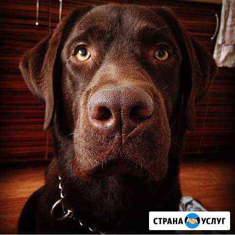 Кабель для вязки.Лабрадор Ростов-на-Дону