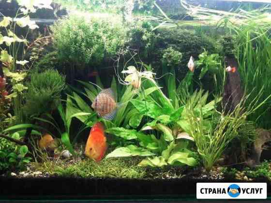 Обслуживание аквариумов Дзержинск
