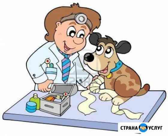 Ветеринарный врач Майкоп