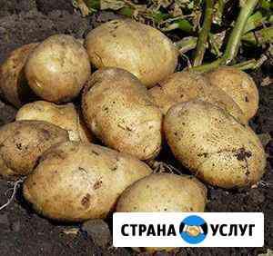 Картофель Доставка Улан-Удэ