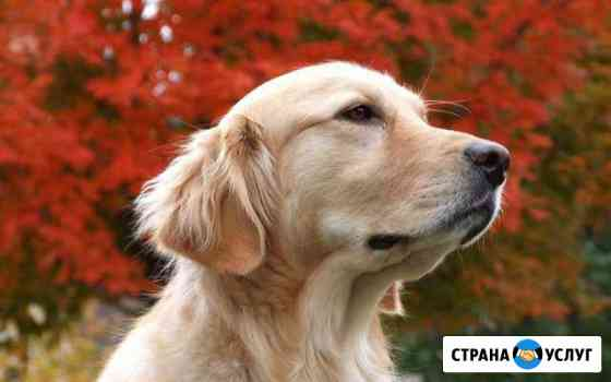 Выгул собак Таганрог