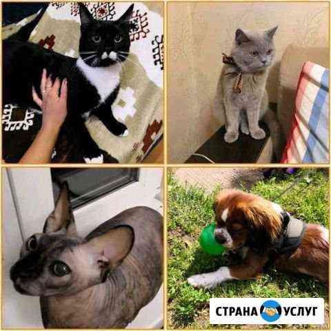 Домашняя передержка для кошек и собак Кострома
