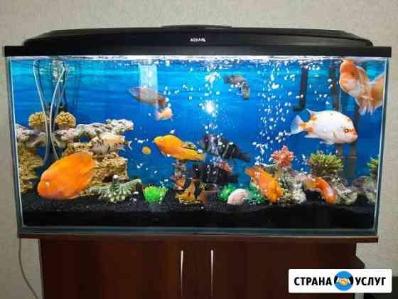 Сервисное Обслуживание Аквариумов Пермь