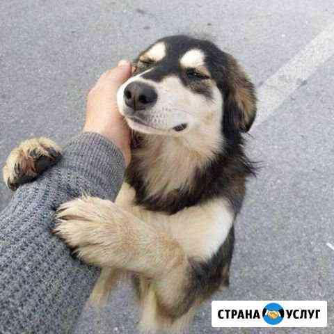 Выгул собак Краснодар