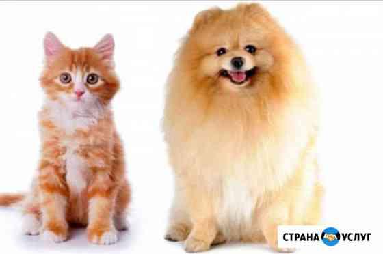 Стрижка собак и кошек разных пород.Груминг Петрозаводск