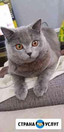 Ищу кошечку для любовных утех Чита