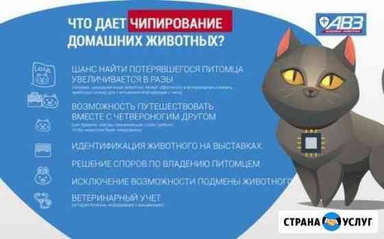 Чипирование кошек и собак Нальчик