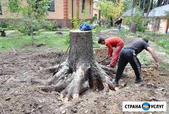 Расчистка участков,спил деревьев Сочи