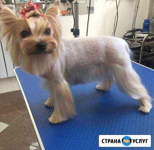 Стрижка собак и кошек всех пород Комсомольск-на-Амуре