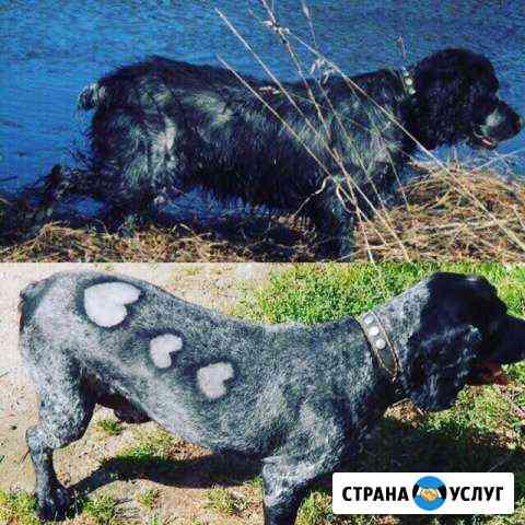 Стрижка домашних животных Великий Новгород