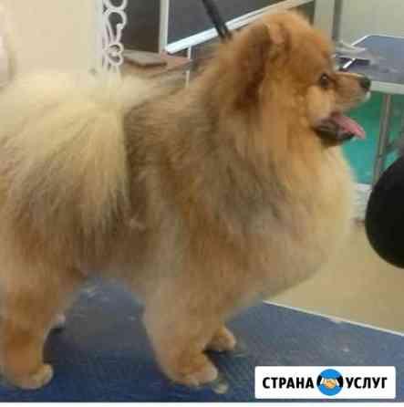 Стрижка собак и кошек Томск