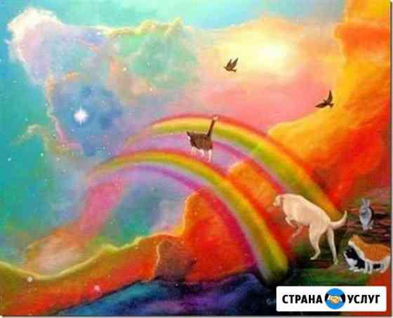 Эвтаназия (усыпление) собак. Кошек24 часа. вывоз Владивосток