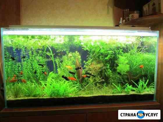 Обслуживание аквариумов Усинск