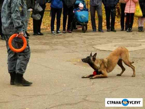 Современная дрессировка собак Казань