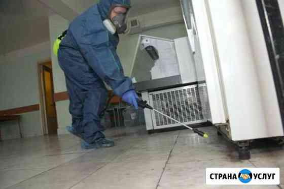 Уничтожение клопов,тараканов,крыс,блох Санкт-Петербург