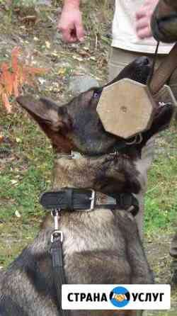 Дрессировка собак Санкт-Петербург