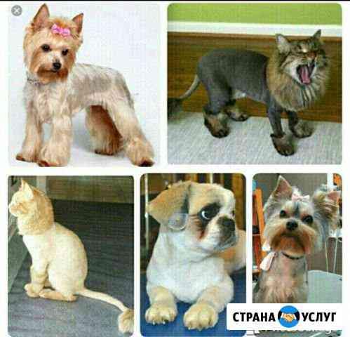 Стрижка собак и кошек Псков