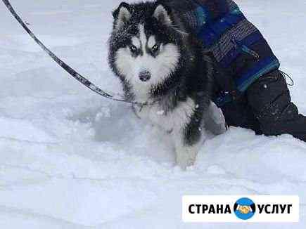 Вязка Саранск