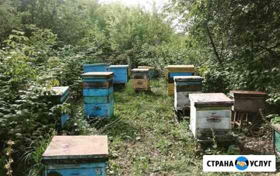 Натуральный мёд Норильск