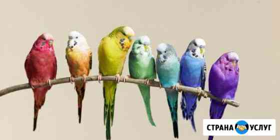 Передержка птиц Воркута