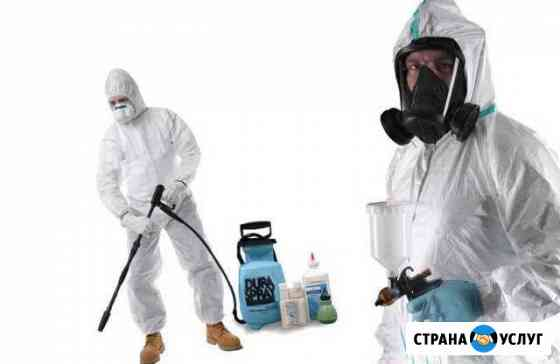 Дезинфекция, дезинсекция, уничтожение насекомых Мытищи