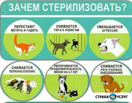 Ветеринарный врач на дом Великий Новгород