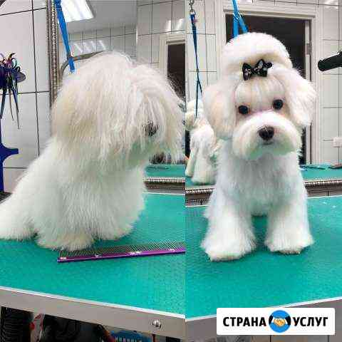 Стрижка собак Кемерово